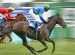 more about fun day out at the hipodromo racecourse in mijas