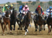 more about race day at the hipodromo in mijas