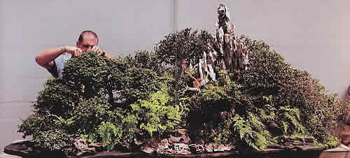 The bonsai museum in marbella houses an amazing collection of bonsai and its worth visiting.