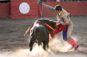 Spanish Bullfighting banned from 2012 by Catalan Parliament ...